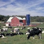 FDA Shuts Down Farm for… Selling Fresh Milk