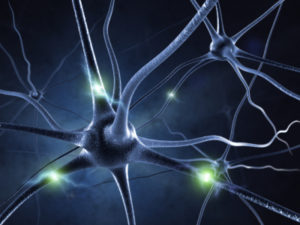 Stem Cell Research Offers New Hope for Repairing Brain