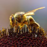 How Capitalism Saved the Bees