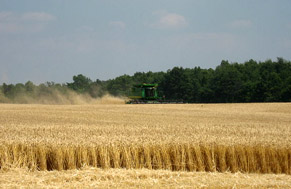 wheat-harvest